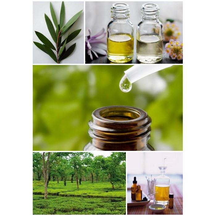 Oleo de Melaleuca - Antifúngico Natural
